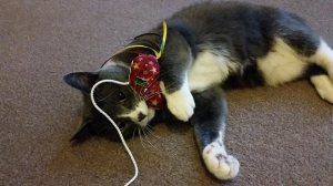 holiday cat care in south shields