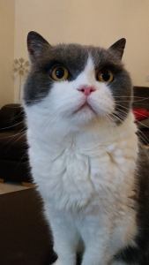 Dolly in mobile cattery