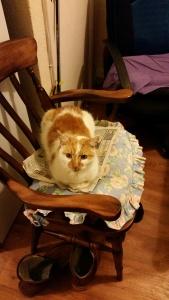 Ginger tigga cat south shields