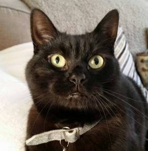 House cat in seaburn sunderland