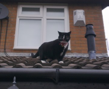 Cat stuck on roof