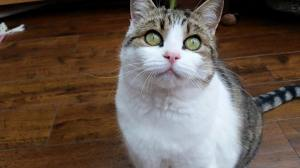 Cat care boldon sunderland