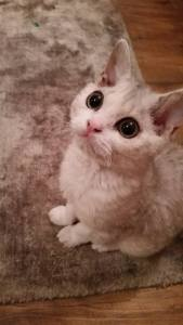 Kitten sitting in South Shields