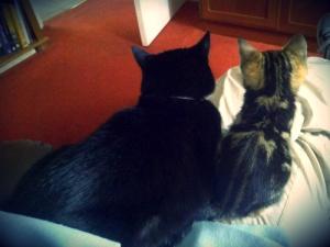 Los dos gatos