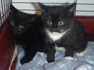Animal Krackers Kittens