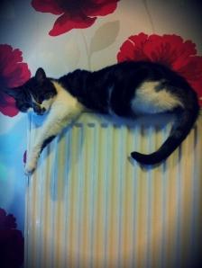 Sleeping radiator cat
