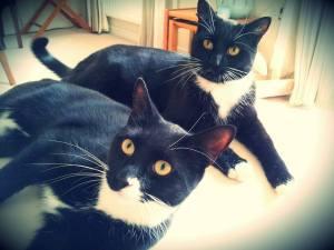 Black cats pet sitting