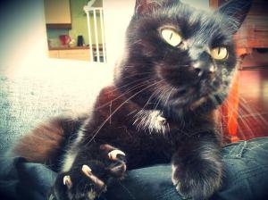 Cat sitting whitburn