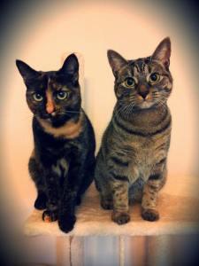 Alternative cat care