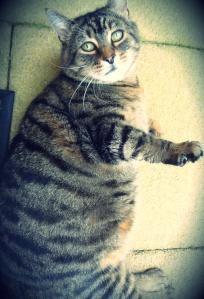 Chloe-cat