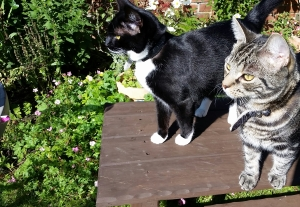 Cat sitting cattery in Cleadon