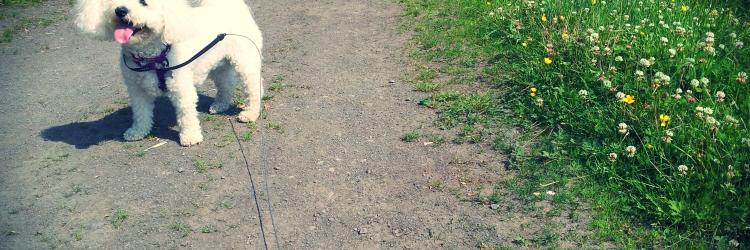 Pet sitter in sunderland