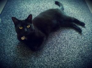 Black cat south shields