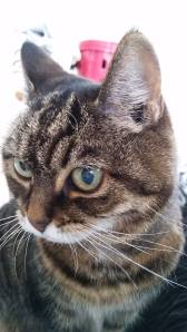 Cat sitting in SR6