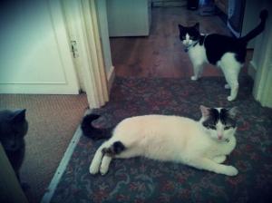 Sunderland cat care