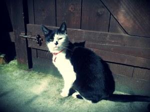 Maisie getting some vitamin D