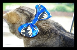 Safety bow tie cat collar