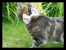 boop love bow tie