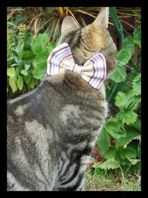 bow tie love heart