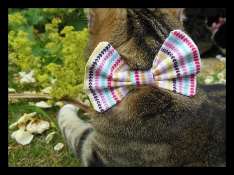 love heart cat bow
