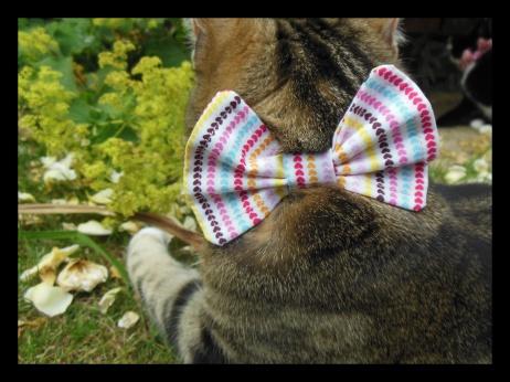 love heart cat bow