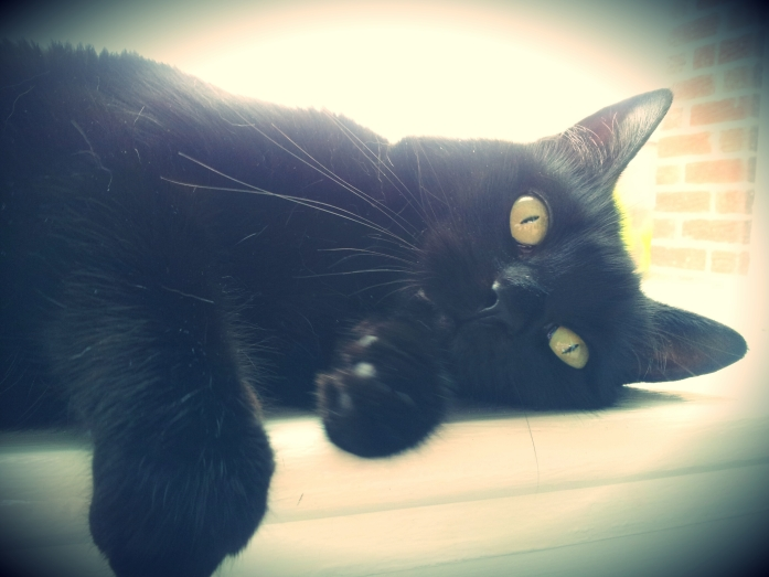 Sleepy black cat on windowsill