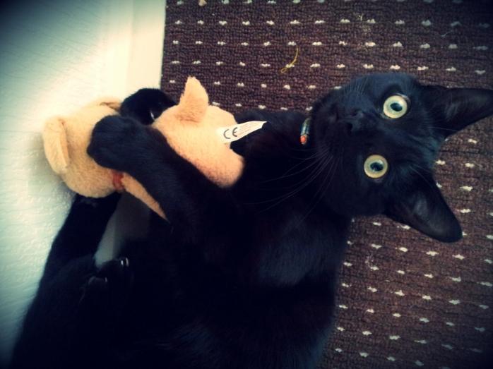 Black cat cuddling teddy