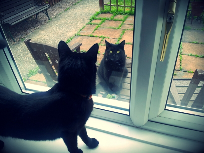 Black cats looking through window