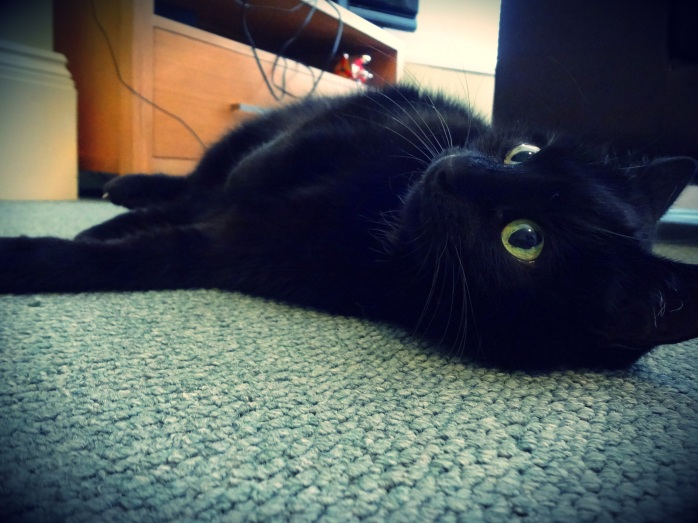 Maxi black cat lying down