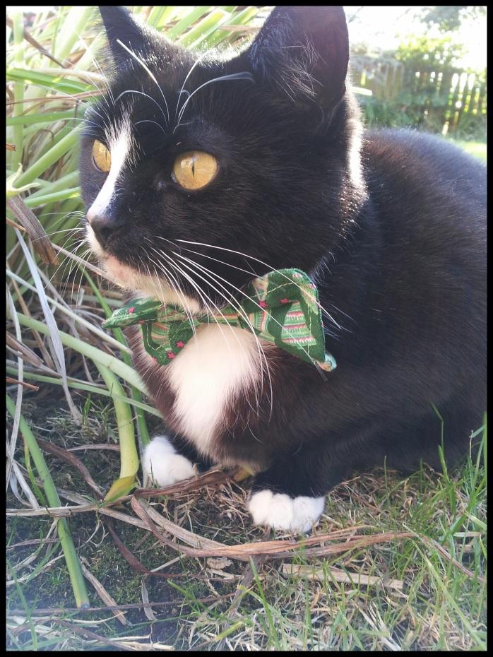Christmas bow tie cat collar
