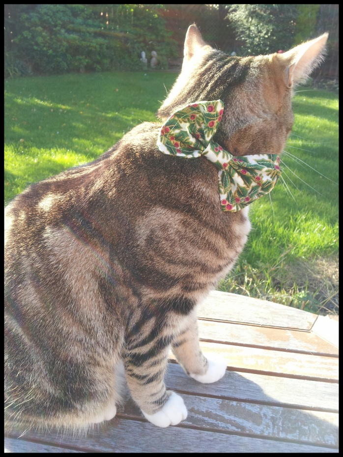 Christmas holly bow tie cat collar