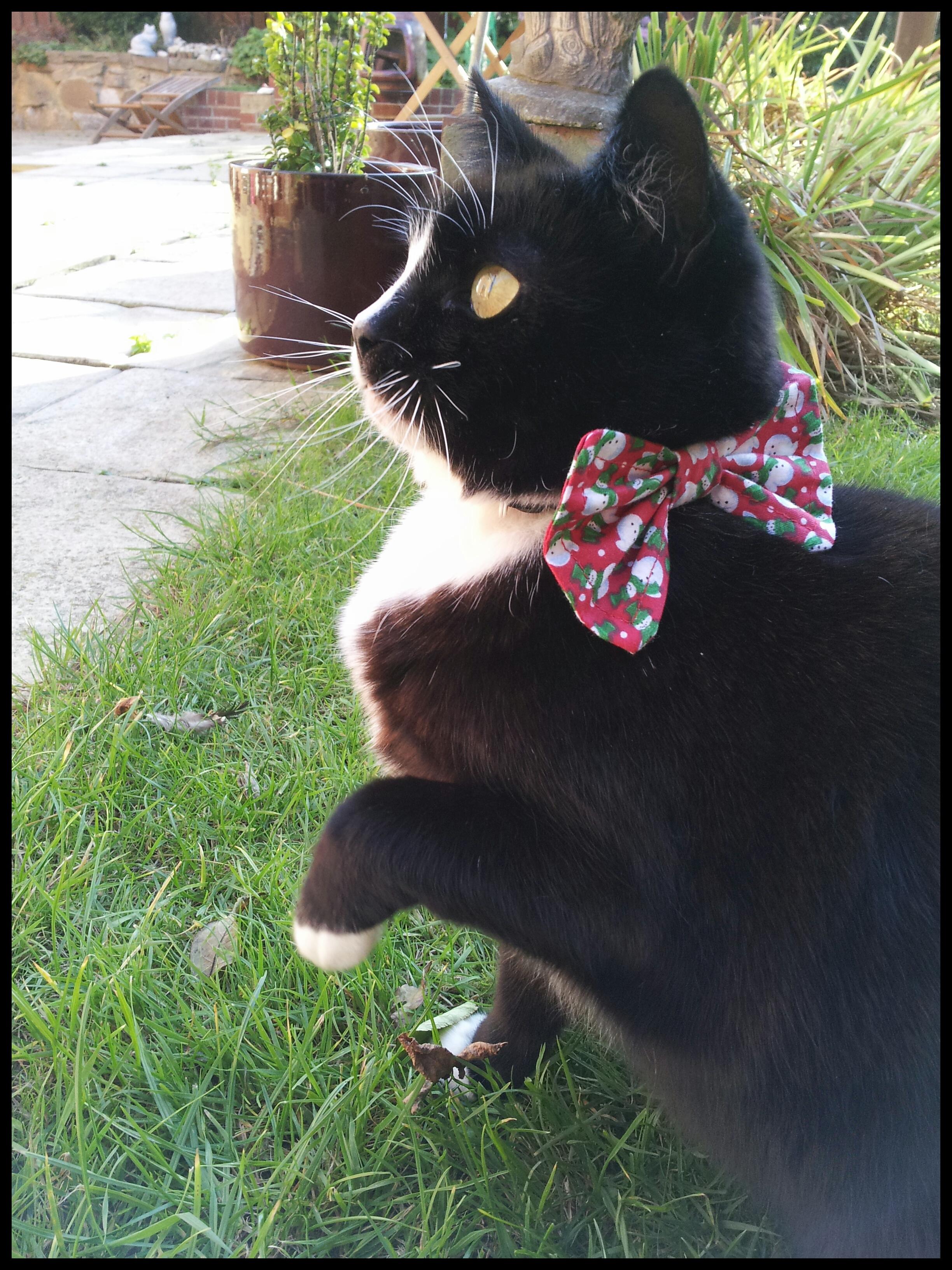 Kitten In A Bow Tie Snowman Bow Tie Cat Collar