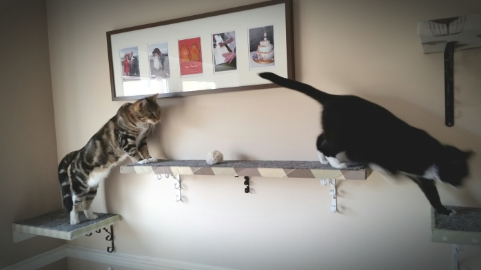 Cats using cat shelves