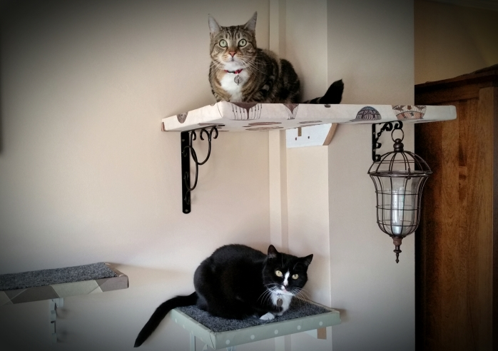 Cats sitting on shelves