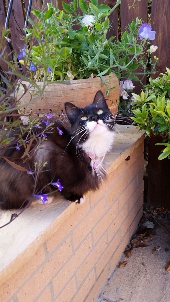 Missy cat in the sunshine