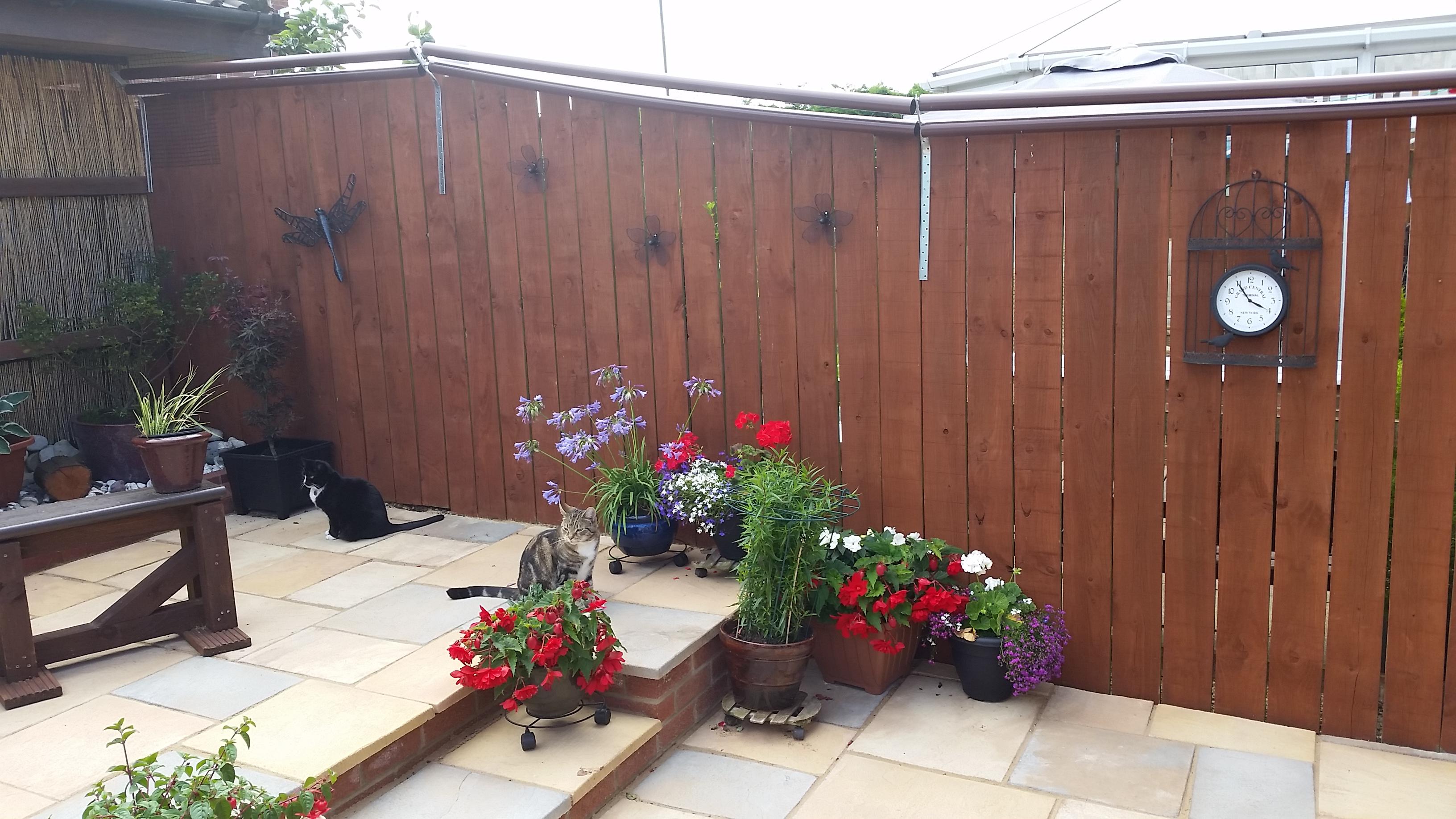 Outdoor Cat Enclosure How To Build