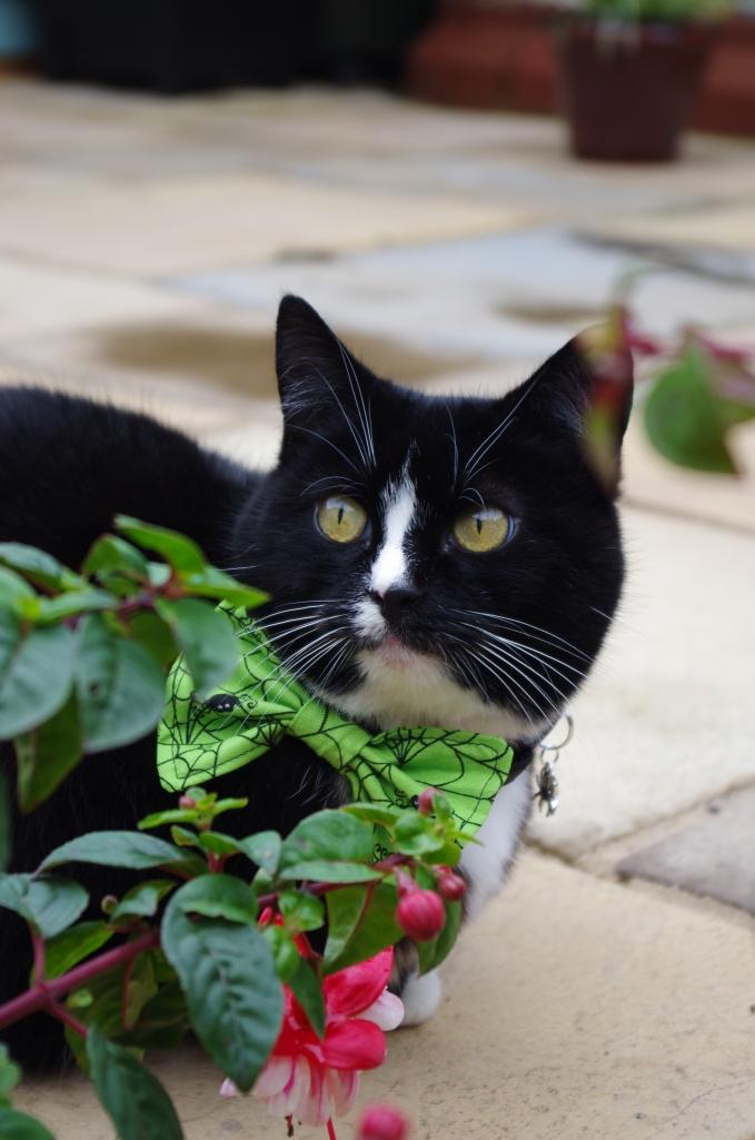 Green halloween cat bow tie