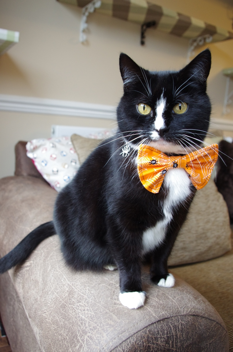 Halloween cat bow tie in orange and black spiders