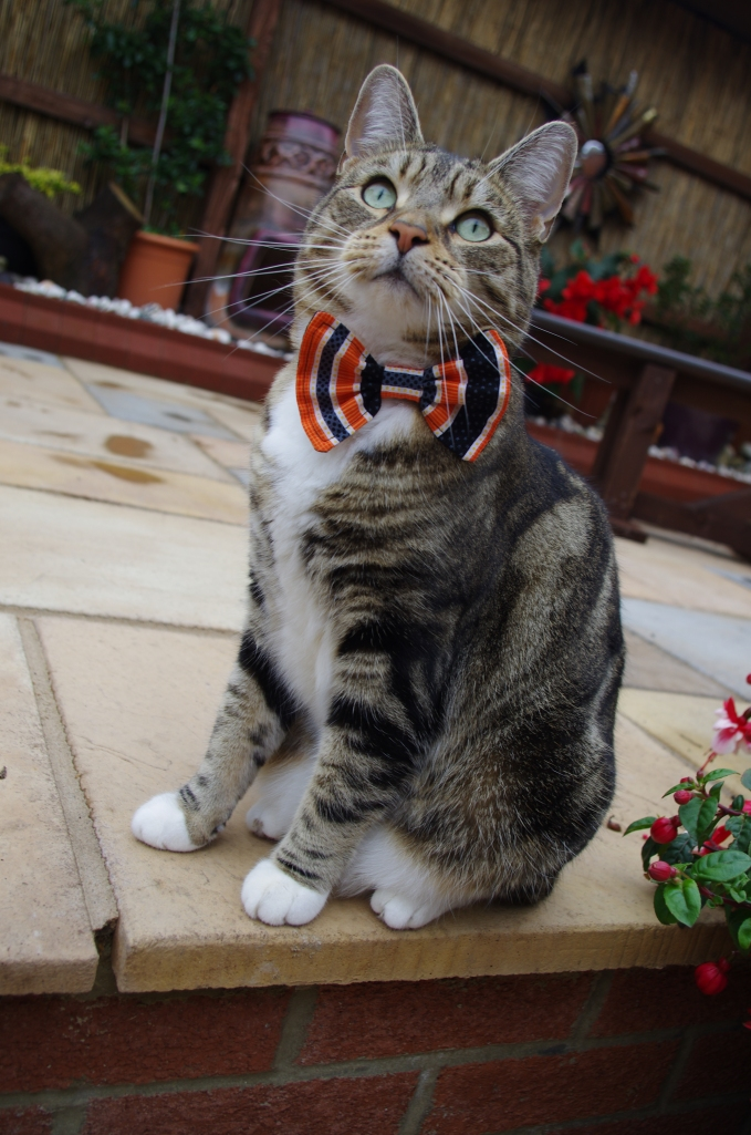 Halloween black and orange striped bow tie and cat collar