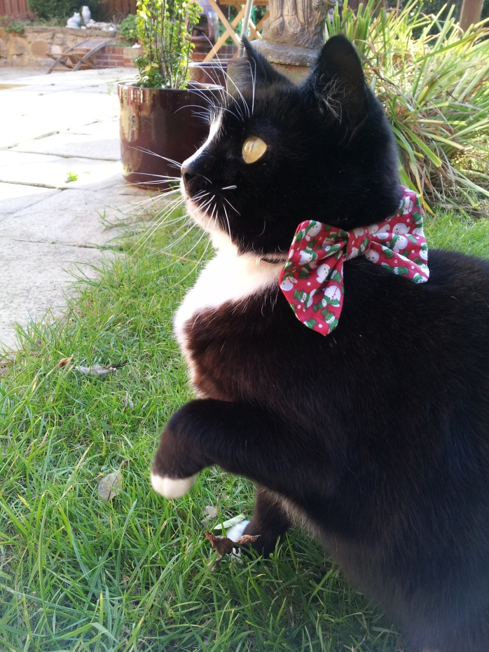 Christmas Bow Tie Cat Collar