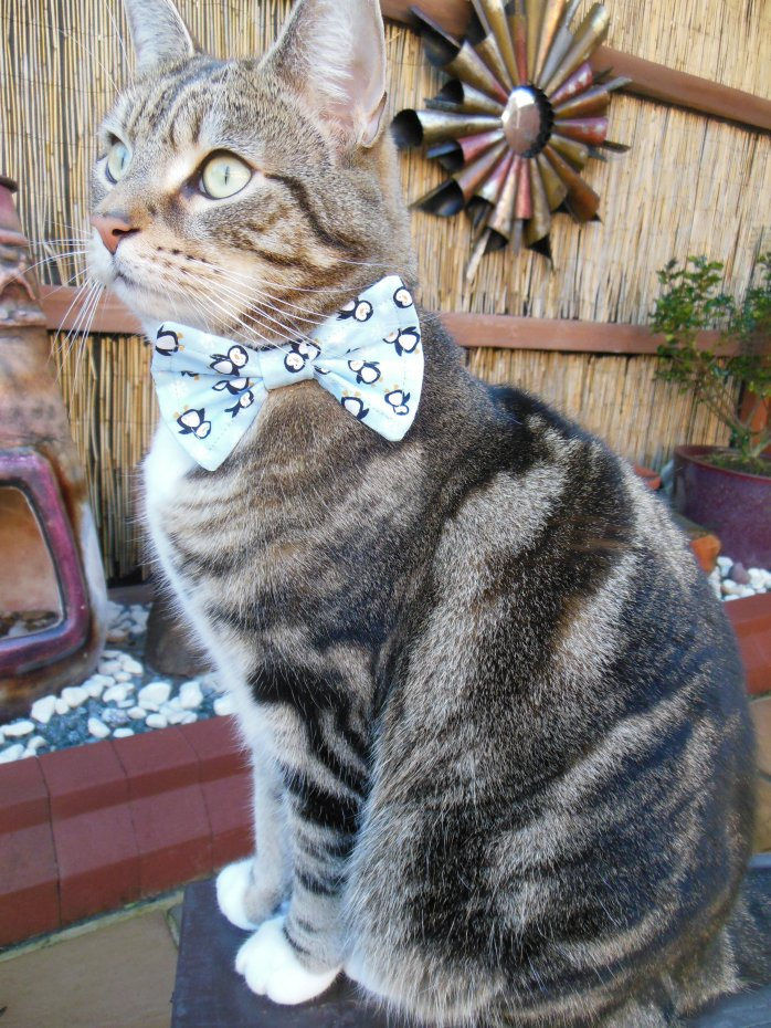 Penguin Christmas 2014 cat collar