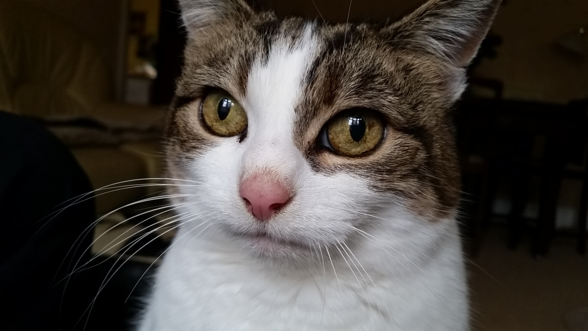 cat sitting south tyneside