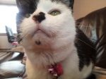 cat sitting southwick