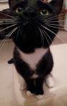 cat sitter whitburn sunderland
