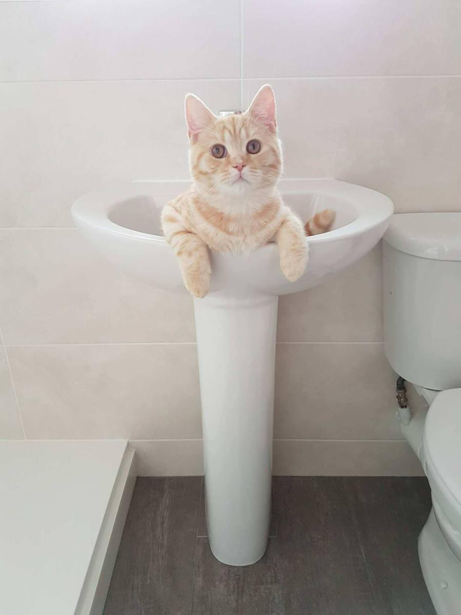 Cat drinking water from sink